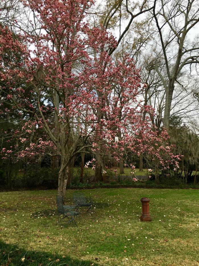 The Linden Bed and Breakfast Natchez Mississippi Magnolias