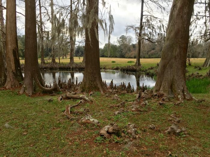 Melrose NPS Natchez Mississippi Cypress Pond