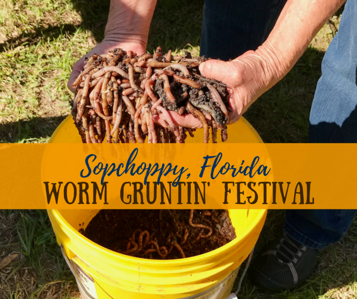 Florida Travel: The Sopchoppy Worm Gruntin' Festival