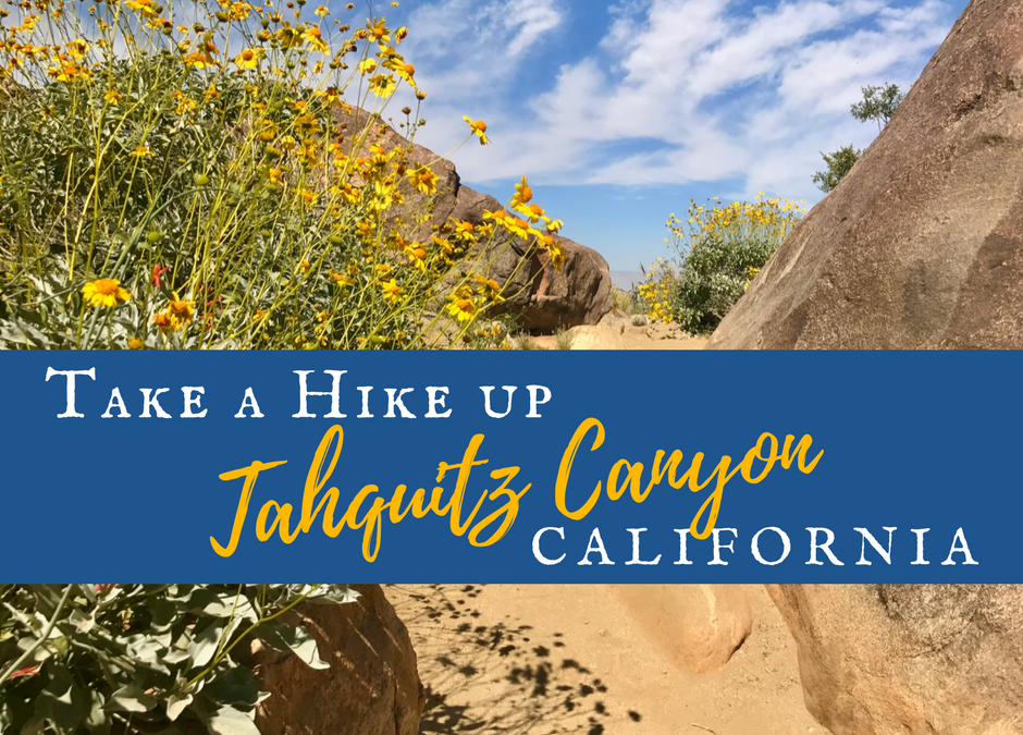 Take a Hike up Southern California's Tahquitz Canyon
