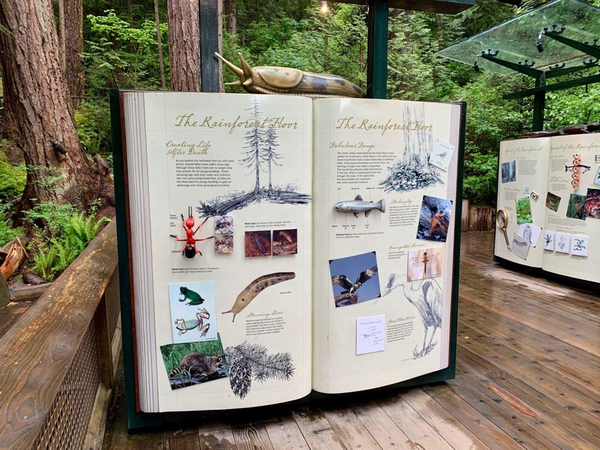 Rainforest Exhibit at Capilano Suspension Bridge Park